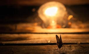 Warme Lichtfarben ziehen weniger Insekten an.