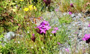 Naturnaher Garten für Insekten, Eidechsen und Co.