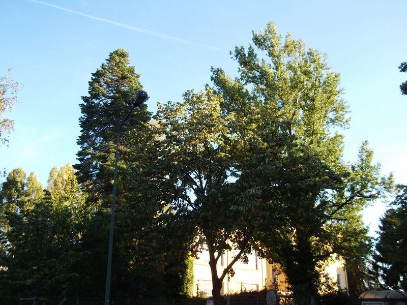BUND, Naturschutz, Nachhaltigkeit, Klimawandel, Frankfurt, Rödelheim, Bauvorhaben