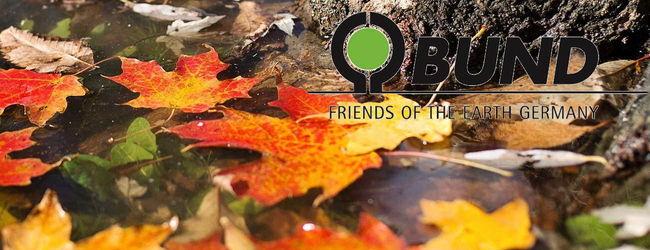 Blätter im Wald im November