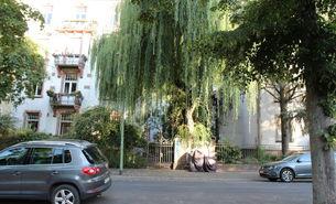 Stadtbaum im Vorgarten