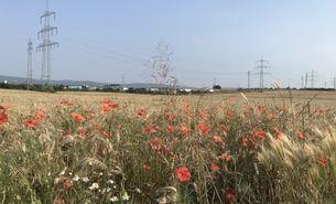 Blumen und Felder auf der Flur des geplanten Stadtteils im Nordwesten.