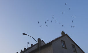 Mauersegler in der Luft